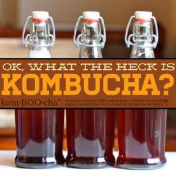 Kombucha Benefits and Side Effects (THE FULL GUIDE)