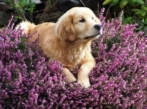 essential-oil-pet-products